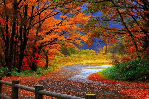 Fall Waterfall Wallpapers Top Free Fall Waterfall