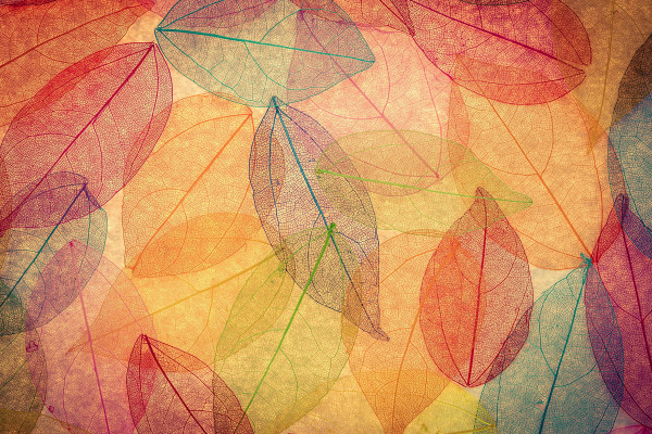 Autumn Abstract Wallpaper