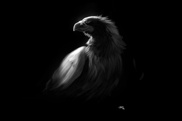 Hd Eagle Wallpapers Top Free Hd Eagle Backgrounds