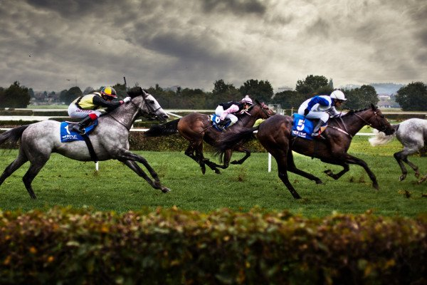 Racehorse Wallpapers - Top Free Racehorse Backgrounds - WallpaperAccess