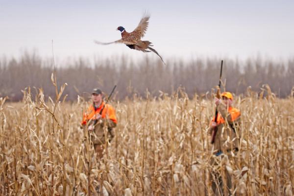 Duck Hunting Desktop Wallpapers Top Free Duck Hunting