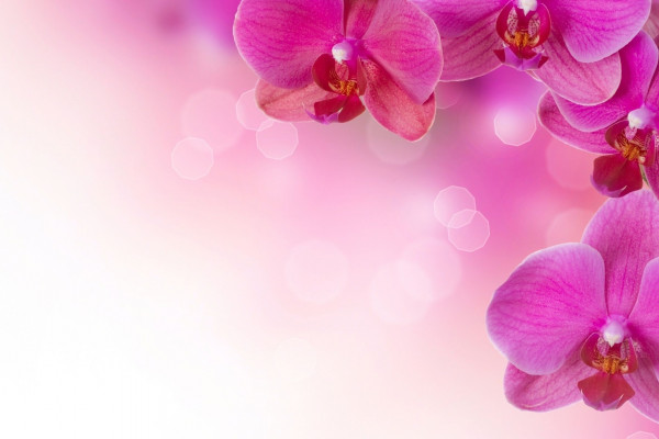 Orchid Design Wallpaper